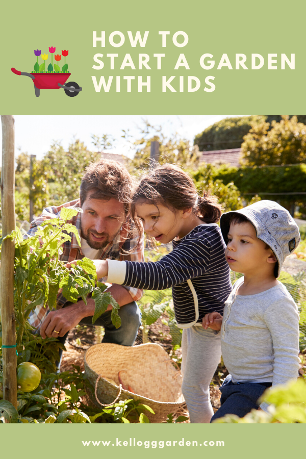 dad, little girl, and little boy gardening tomatoes