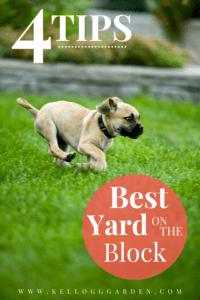 tan dog running on the green grass