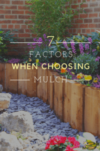 garden with rock mulch and planters have purple and yellow flowers pinterest image