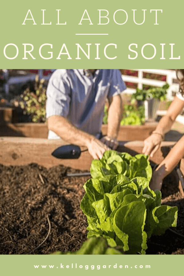 man and women gardening raised bed with lettuce being planted