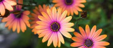 Orange and purple daisy flowers.