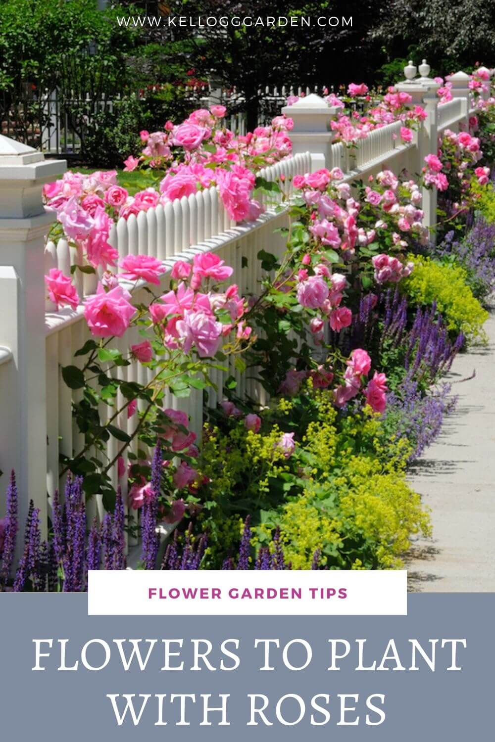 Companion Plants For Roses Kellogg Garden Organics