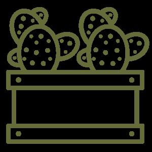 cactus in a box icon
