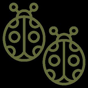 two ladybugs icon