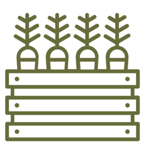 carrots in a raised bed icon