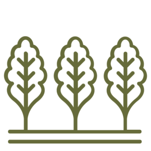 leafy sprouts coming out of the ground icon