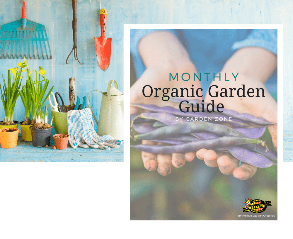 Organic monthly garden guide