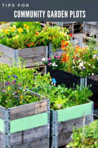 """Community garden with text, """"Tips for Community Garden"""""""