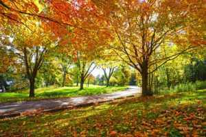 Footpath through colorful maple trees in autumn park with no people