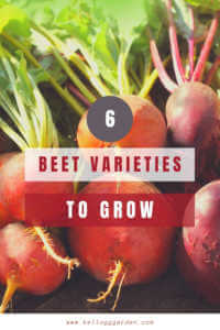 """Close up of beets with text """"6 Beet Varieties to Grow"""""""