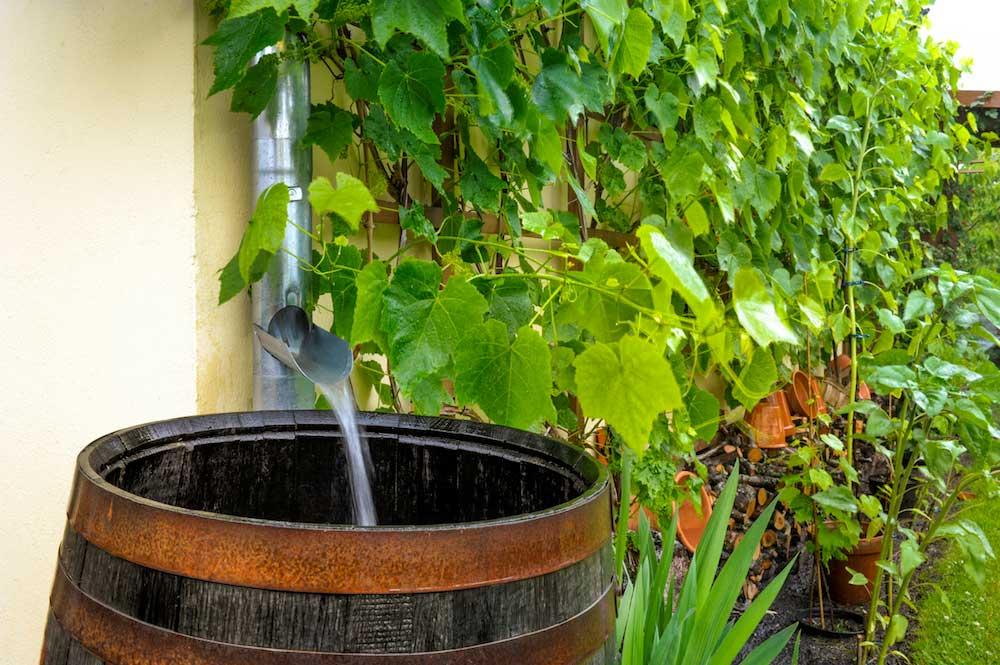 Rainwater runs into the water barrel