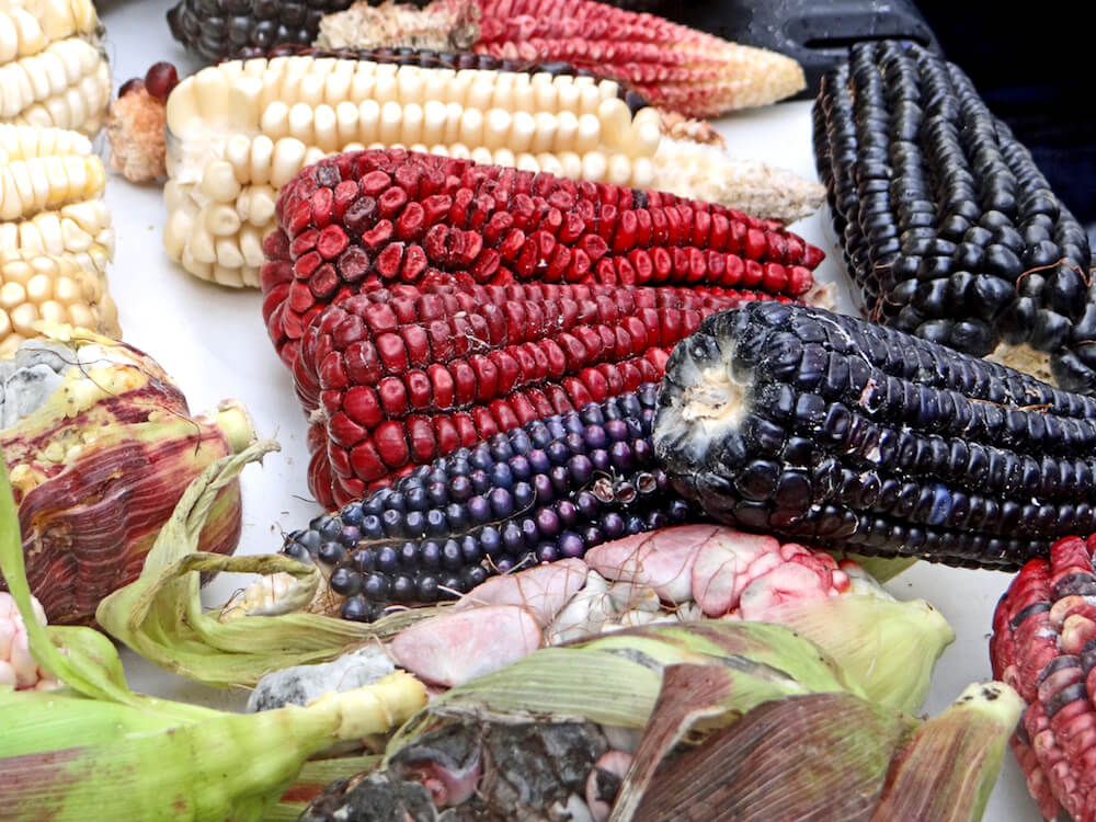close up photo of white, red and purple corn.