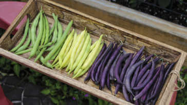 Image of Colorful String Beans in a wooden basket.