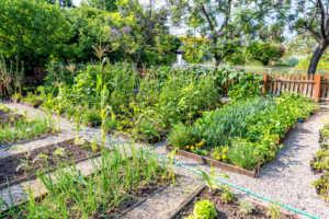 Large community vegetable garden