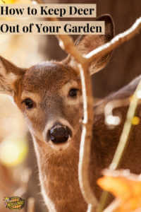 """Close up deer with text, """"How to keep deer out of your garden"""""""