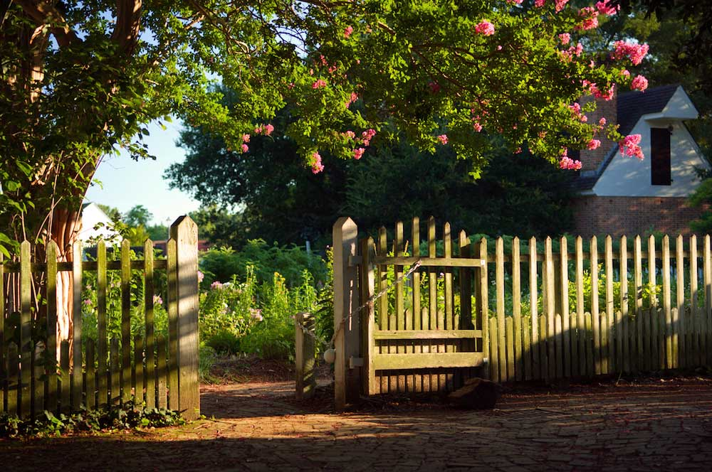 Beautiful Garden Bathed in Golden Sunlight in front of a picket fence.