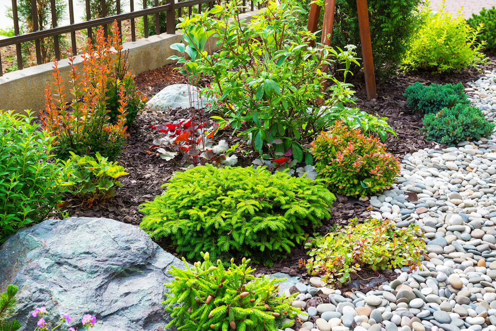 Green garden with rock and mulch