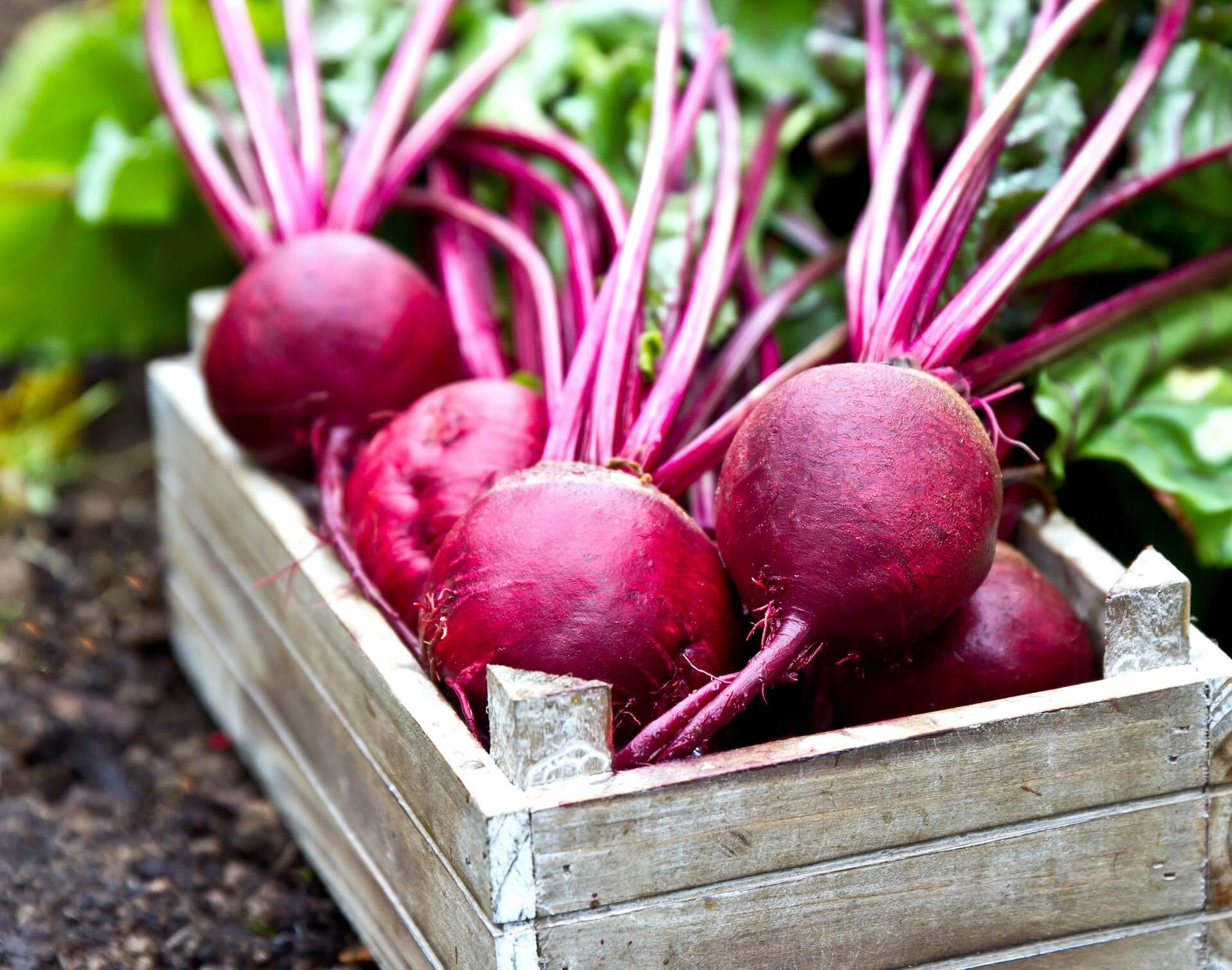 freshly picked pinkish red beets with leaves in a wooden tray