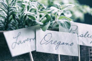 Close up of oregano, lavendar, and parsley labels leaning against their respective containers.