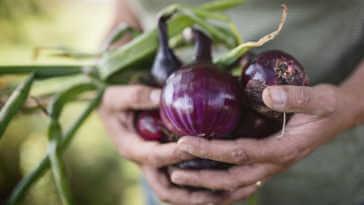 Man Holding Purple Onions