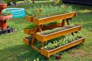 Homemade rural mobile wooden vegetable beds for growing onions, dill and radish plants.