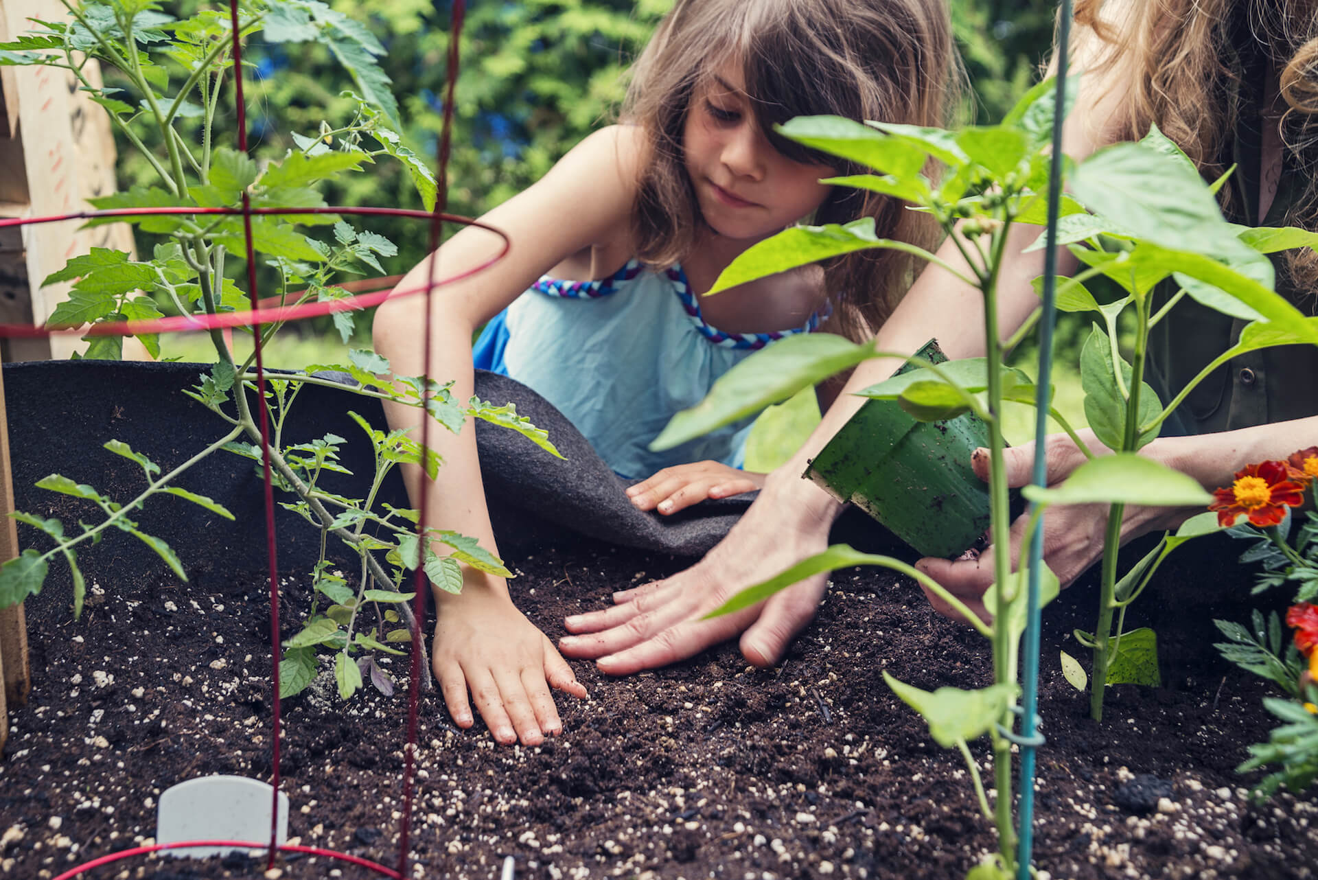 Mother and daughter gardening in a small space outdoors. Mother is showing kid how to even out the soil. Selective focus on kid's hand. Pepper plant in foreground, tomato plant present.
