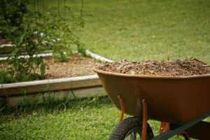 Mulch for garden with tomato plans bed on background