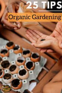 "Eggshell garden with text, ""25 Tips, Organic Gardening"""