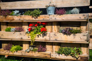 Pallet rebuilt into flower boxes