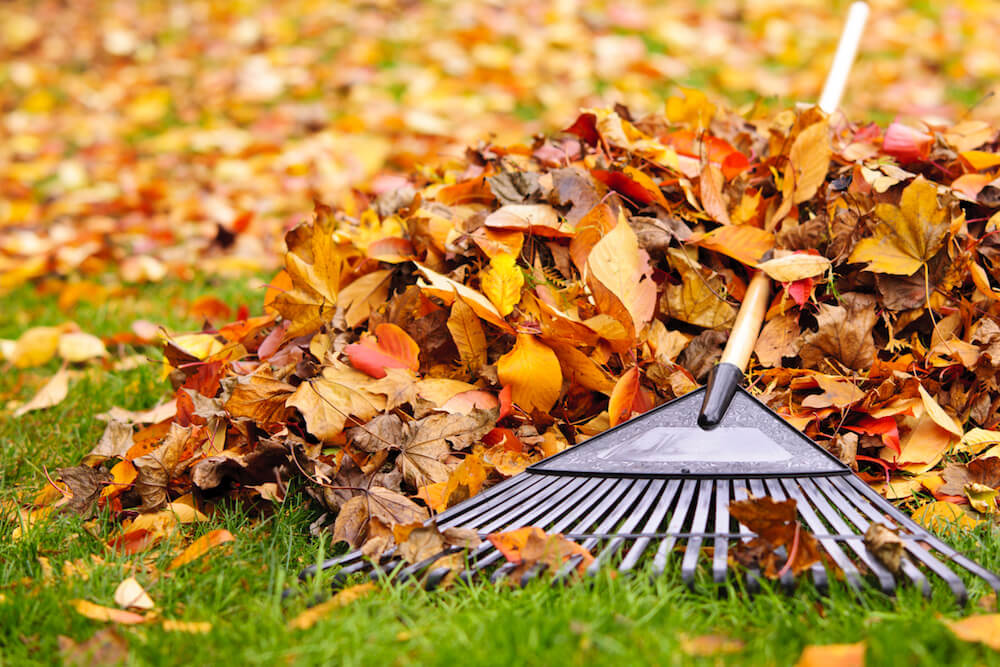 Pile of fall leaves with fan rake on lawn