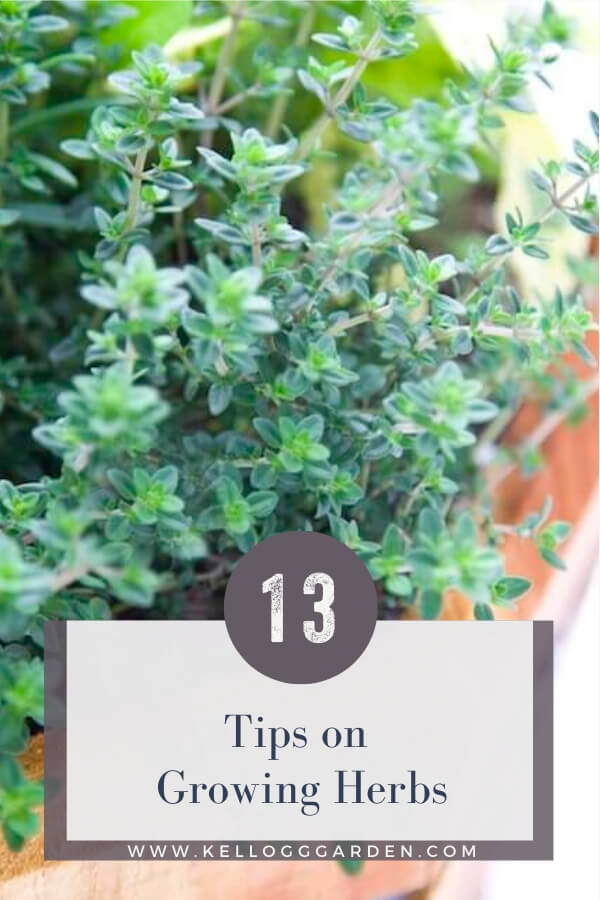 "Close up picture of potted herbs with text, ""Tips on Growing Herbs'"