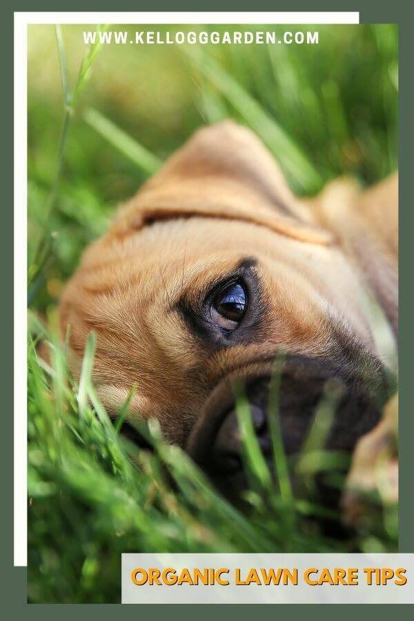 """Close up picture of puppy laying in grass with text """"Organic Lawn Care Tips"""""""