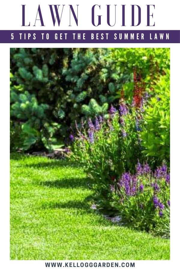 """Picture of a green backyard with purple lavender plants and text, """"Lawn Guide, 5 Tips to Get the Best Summer Lawn"""""""