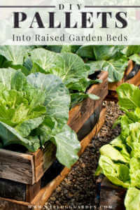 """Lettuce garden made from old pallets with text, """"DIY pallets into raised garden beds"""""""