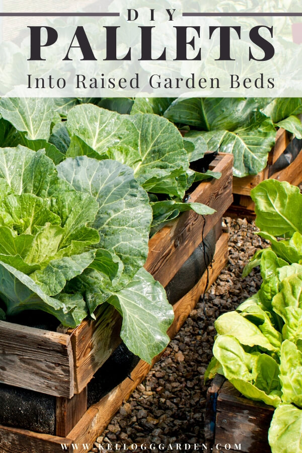 "Lettuce garden made from old pallets with text, ""DIY pallets into raised garden beds"""