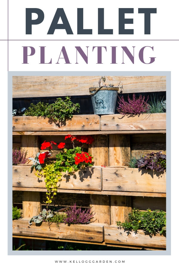 "Using an old pallet for flower boxes with text, ""Pallet Planting"""