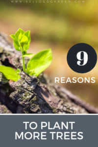 "Close up sprout with tex, ""9 Reasons to plant more trees"""