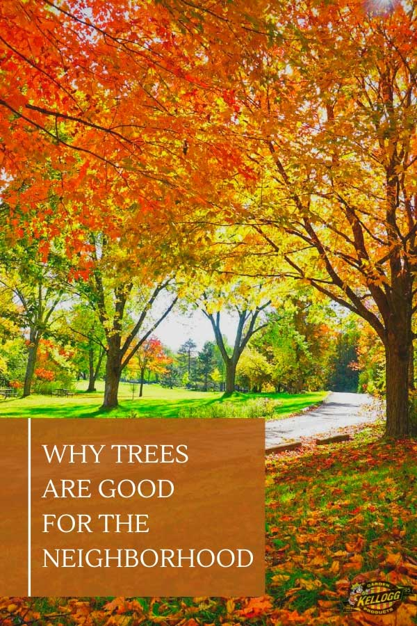 "Trees with fall colored leaves with text, ""Why trees are good for the neighborhood"""