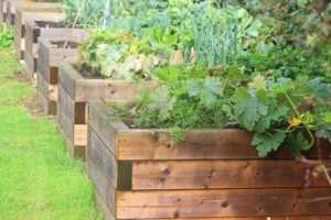 row of raised beds with vegetables in it