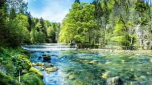 River with trees surrounding the water nature scene