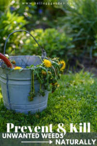 """Bucket of weeds with text, """"Prevent and Kill Unwanted weeds naturally"""""""