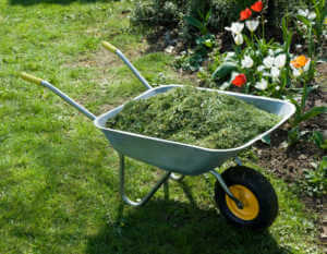 Wheelbarrel with Grass Clippings