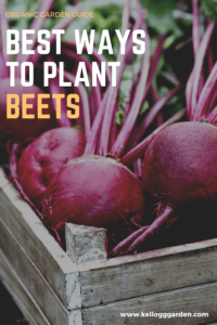 4 red beets in a wooden crate