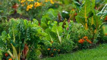 garden with leafy vegetables and bright colored flowers