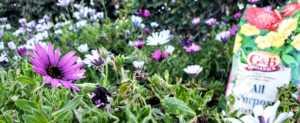 GB Organics Fertilizer bag in flower bed