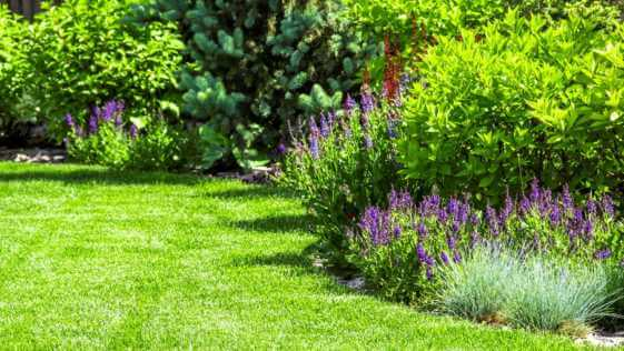 Green lawn in backyard