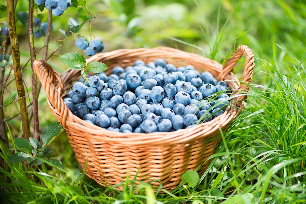 blueberries in a brown basket