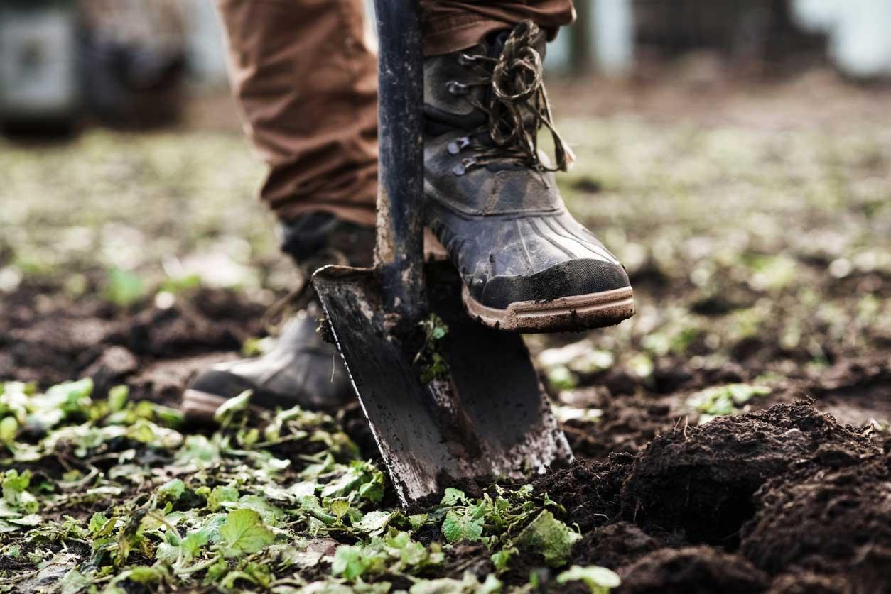 Shoveling the topsoil of a garden