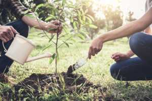 Young couple planting the tree while Watering a tree