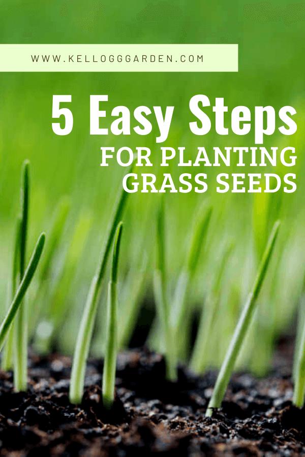 grass growing from dirt pinterest image